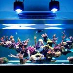 Top 10 Best LED Lighting for Reef And Saltwater Tanks – (2021 Reviews & Guide)