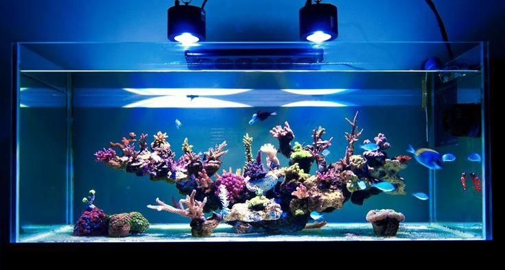 Top 10 Best LED Lighting for Reef And Saltwater Tanks Review
