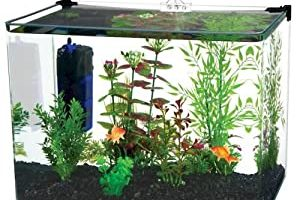 Latest Top 15 Best Fish Tanks in 2021 [Buying Guide]