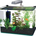 [Latest] The Best 10 Gallon Fish Tanks of 2021