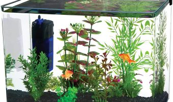 [Latest] The Best 10 Gallon Fish Tanks of 2020