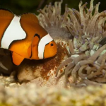 [2021] Top 15 Best Nano Saltwater Fish For Your Nano Reef Tank