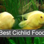Top [2021] Best Cichlid Food for Color & Growth – Cichlid Feeding Guides
