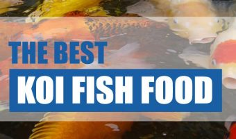 Top [2021] Best Koi Food For Growth and Color – Koi Fish Feeding Guide