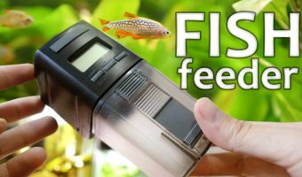 Top [2021] Best Automatic Fish Feeders Review : Take Care Your Fish & Prevent Overfeeding