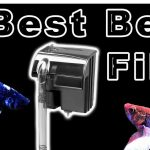 Top 10 Best Betta Filters – Make Your Betta Fish Happy & Healthy