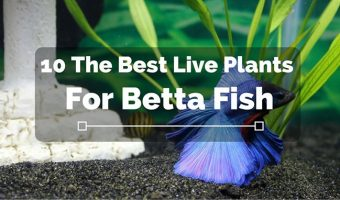 [2021] Top 10 Best Plants For Betta Fish Tanks: Live & Fake Betta Plants