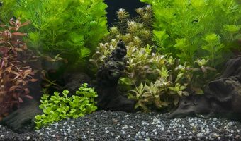 [2021] Top 10 Best Aquarium Gravel For Healthy Plants With Vibrant Colors