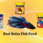 Top [2021] 10 Best Betta Fish Food – Betta Feeding Basic Guides