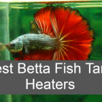 Top [2021] 10 Best Betta Tank Heater For Your Fish Stay Healthy & Safety