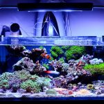 Top [2021] 10 Best Nano Reef Tank Options For Beginners