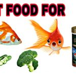 Top [2021] 10 Best Goldfish Food For Growth & Color – Goldfish Feeding Tips