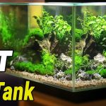 Top [2021] 10 Best Betta Fish Tanks – Ideal Tank Size for Bettas