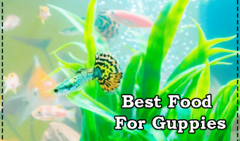 Top 10 Best Guppy Food For Color, Growth & Immune Support