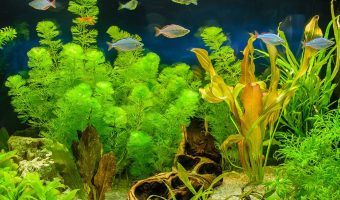 [2021] Top 13 Best Artificial Aquarium Plants: Realistic-looking & Safe For Fish