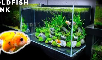 Top 10 Best Goldfish Tanks: What To Know Before Buying