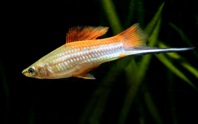 Best fish for a 20-gallon tank